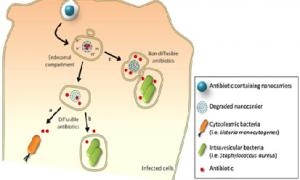 استفاده از اجزای باکتریایی به عنوان نانوحامل های طبیعی برای دارورسانی و یا ژن رسانی و ایمن سازی