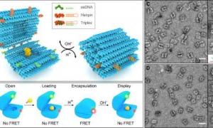 طراحی نانوکپسول هوشمند دارورسان با بهره گیری از اوریگامی (تا کردن) DNA