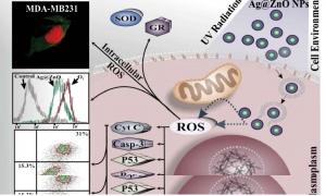 طراحی و سنتز نانوذرات با کاربرد همزمان تشخیص و درمان (Theranostic) در سرطان پستان