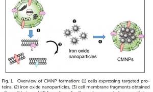 توسعه راهبرد جدید برای جداسازی و شناسایی اختصاصی ترکیبات دارویی جدید از ماتریکس های پیچیده