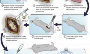 دارورسانی هدفمند به تومورهای طناب نخاعی با استفاده از نانوذرات مغناطیسی